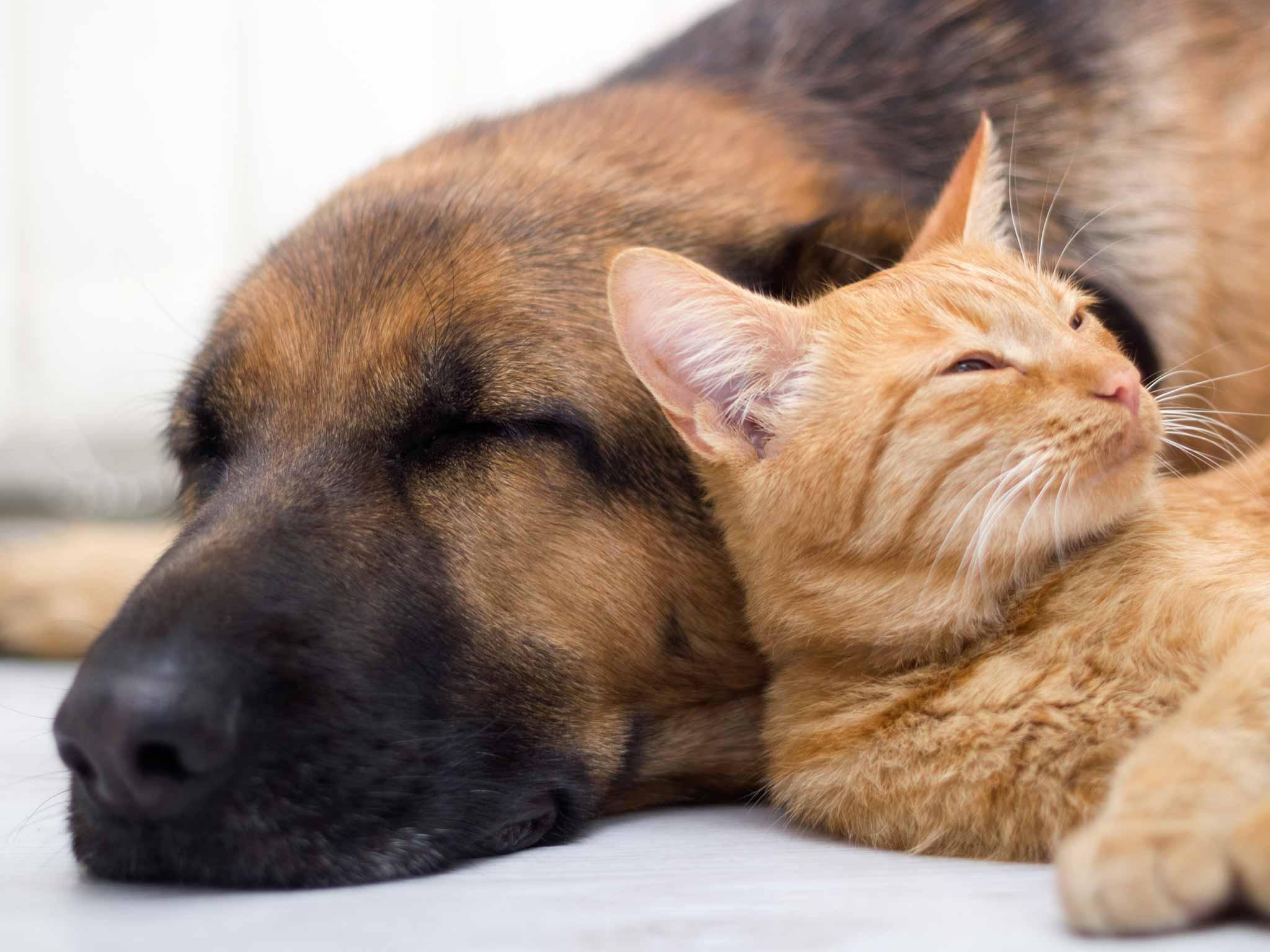Semana santa y las mascotas